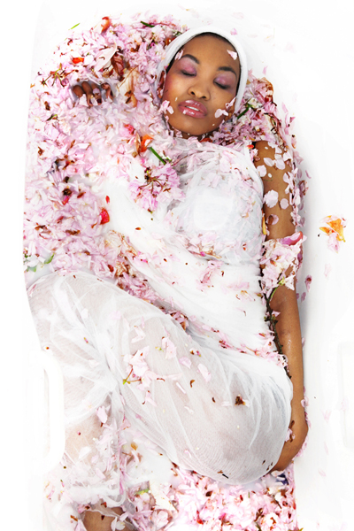 Pink flowers by Anita Kulon